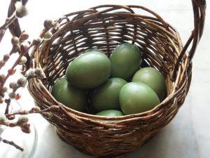 Крапива для покраски яиц на Пасху